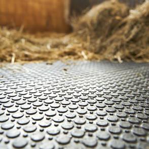 Reitanlage Wampen – Stall und Box