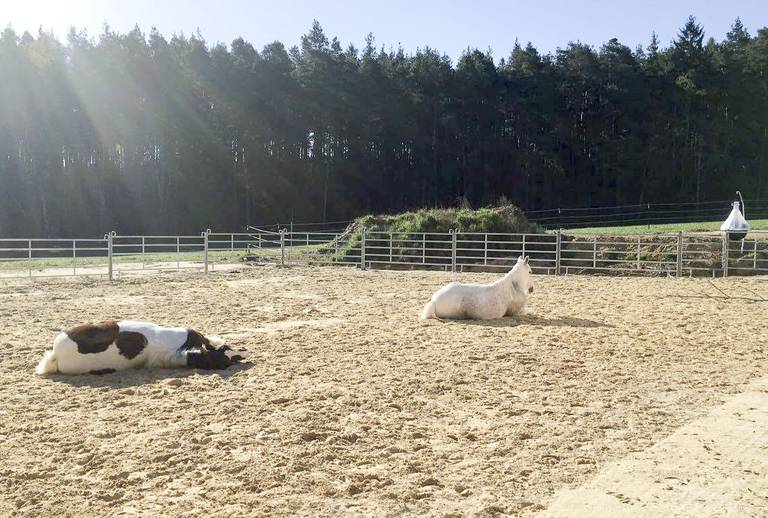 Pferdeauslauf Amberg – Paddockboden