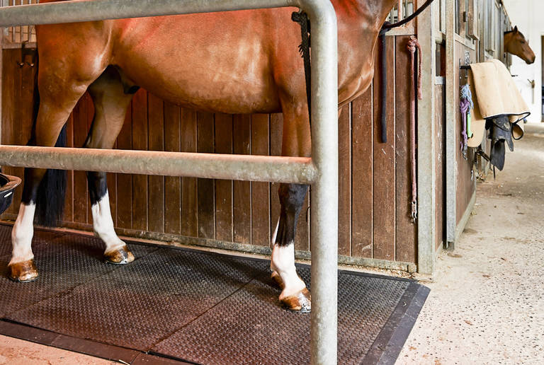 Reitanlage Wampen – stable and horseboxes
